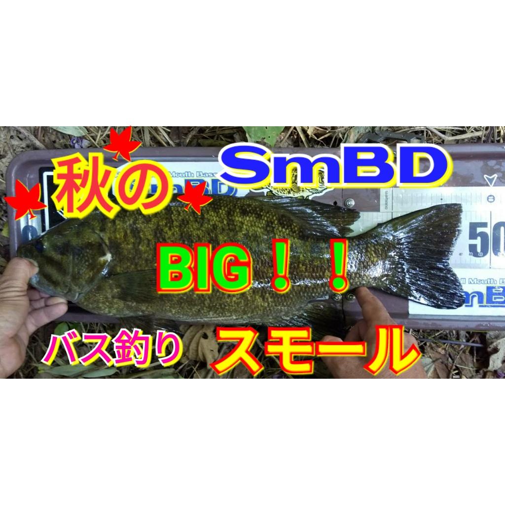 【134話】秋のビッグスモール【YouTube動画】